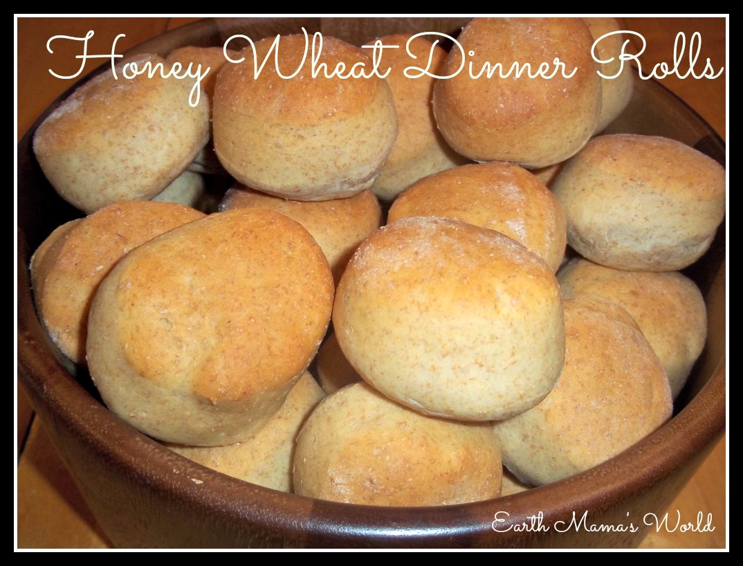 Honey Wheat Dinner Rolls | Earth Mama's World