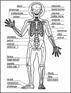 Homeschool Learning About The Skeletal System   Earth ...