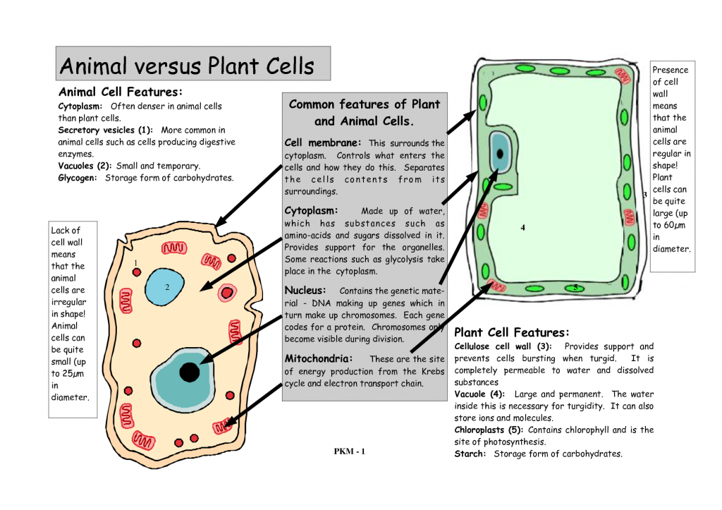 Animal And Plant Cells Worksheet Animal cell vs plant cell