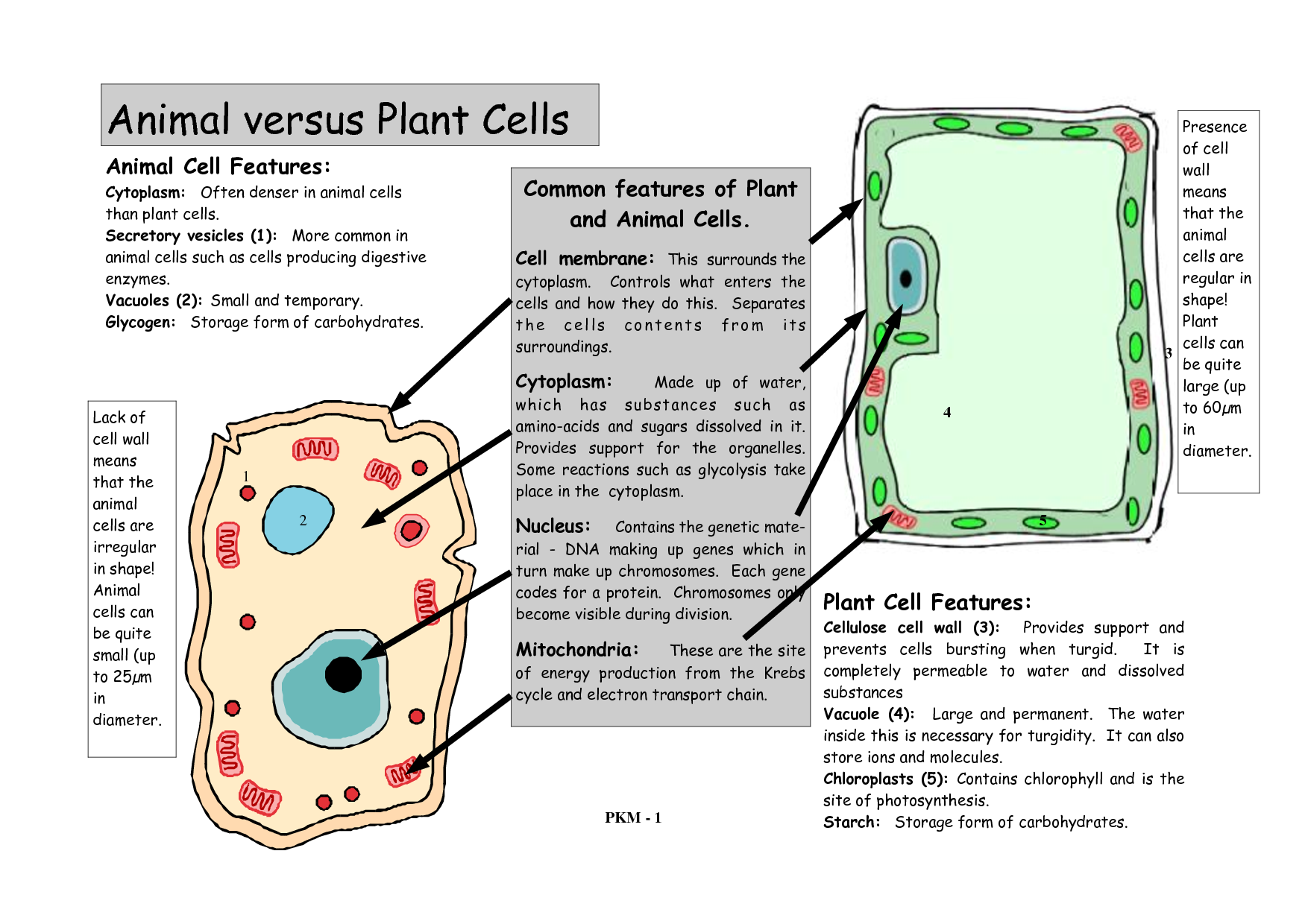 Plant & Animal Cell Printable | Earth Mama's World