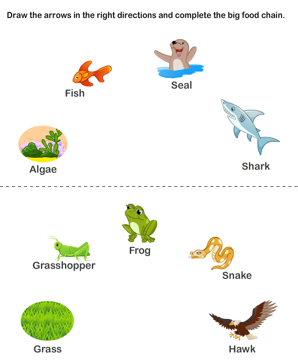 food chain pyramid | Earth Mama's World